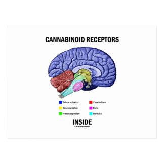 Interior de los receptores de Cannabinoid Postal