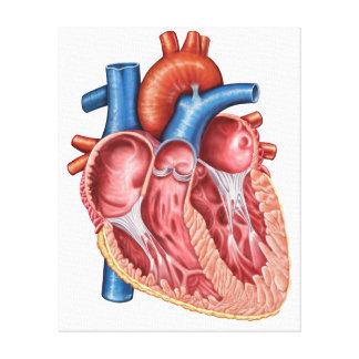 Interior del corazón humano lona estirada galerías