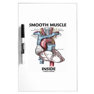 Interior del músculo liso (corazón de la anatomía  pizarra blanca