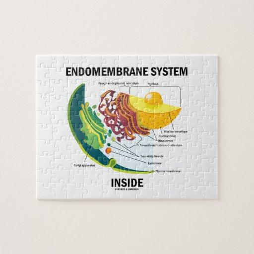 Interior del sistema de Endomembrane (biología Puzzles Con Fotos