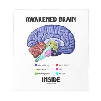 Interior despertado del cerebro (anatomía del bloc