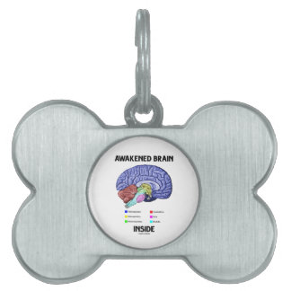 Interior despertado del cerebro (anatomía del placas mascota