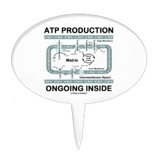 Interior en curso de la producción del ATP Decoraciones Para Tartas