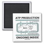 Interior en curso de la producción del ATP Iman Para Frigorífico