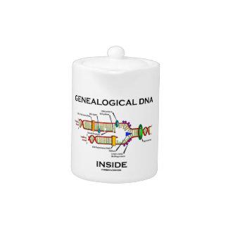 Interior genealógico de la DNA (actitud del