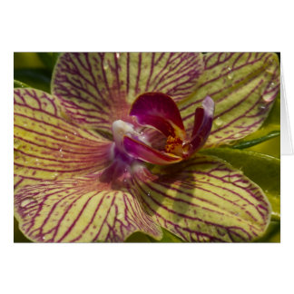 Interior of an Orchid Card