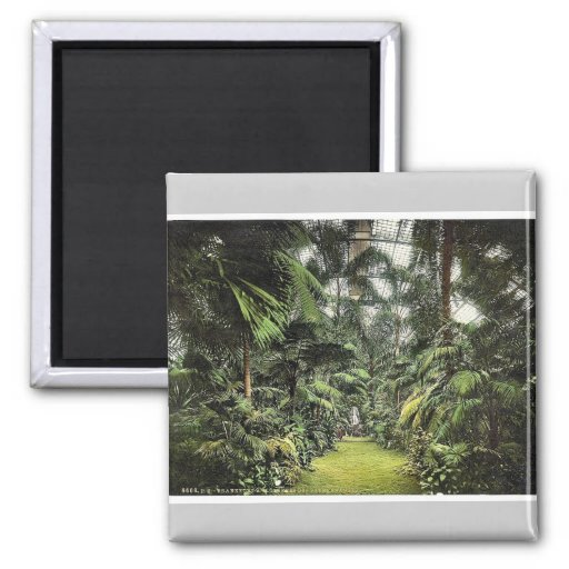 Interior of Palm Houses, Frankfort on Main (i.e. F 2 Inch Square Magnet
