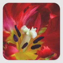 Interior of parrot tulip flower square sticker