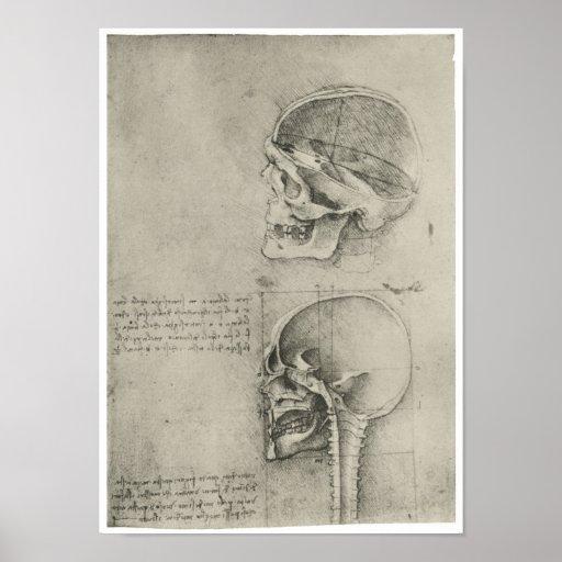 Interior View of the Skull, Leonardo da Vinci Poster