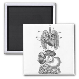Internal Organs 2 Inch Square Magnet