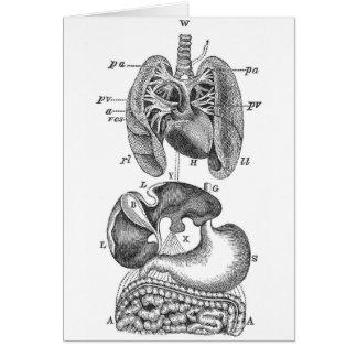 Internal Organs Card