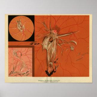 Internal View Retina of the Eye Vintage Print