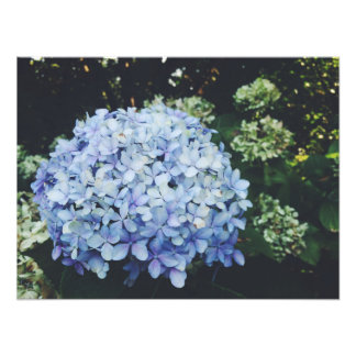 International Rose Test Garden Photo Print