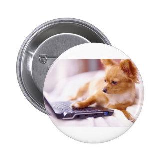 Internet en línea de la chihuahua de Chimi Pin
