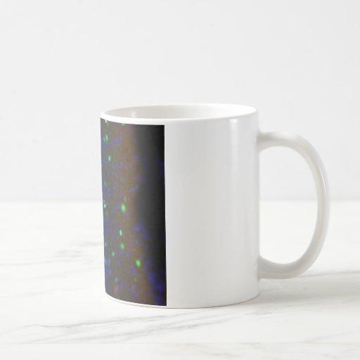 Interneuron 5 taza