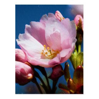 Interpretation of a Cherry Blossom Postcard