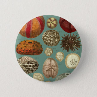 Intestina et Mollusca Linnaei Pinback Button