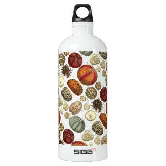 Intestina et Mollusca Linnaei Water Bottle
