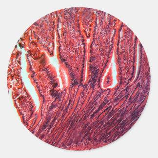 Intestine Cells under the Microscope Classic Round Sticker