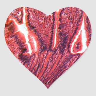 Intestine Cells under the Microscope Heart Sticker
