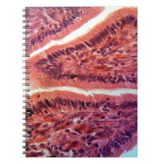Intestine Cells under the Microscope Notebook