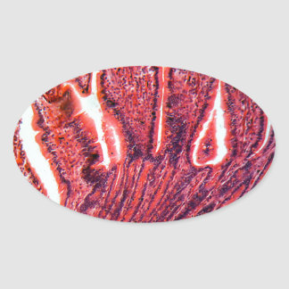 Intestine Cells under the Microscope Oval Sticker