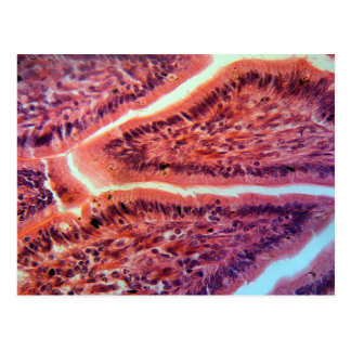 Intestine Cells under the Microscope Postcard