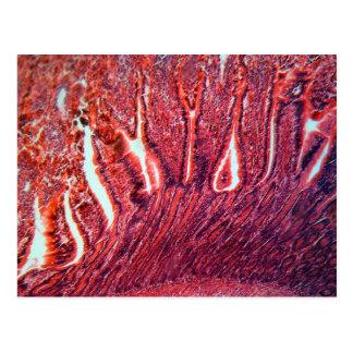 Intestine Cells under the Microscope Postcard