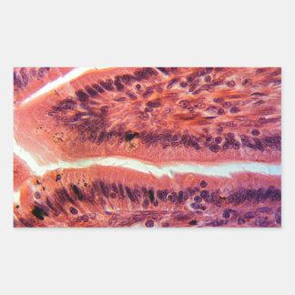 Intestine Cells under the Microscope Rectangular Sticker
