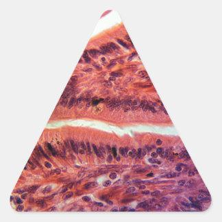 Intestine Cells under the Microscope Triangle Sticker