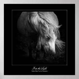 Into the Light - Dartmoor Pony