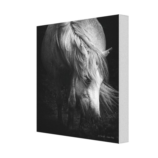 Into the Light - Dartmoor Pony SMALL Canvas Print