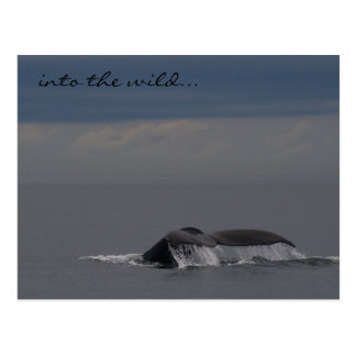Into the Wild... - Humpback Whale Postcard
