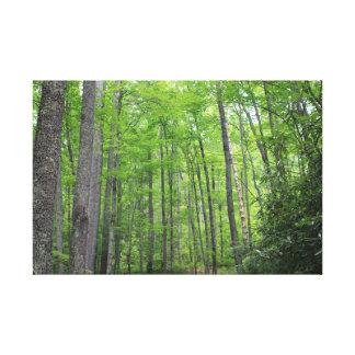 Into the Woods Canvas Print - Smokey Mountains