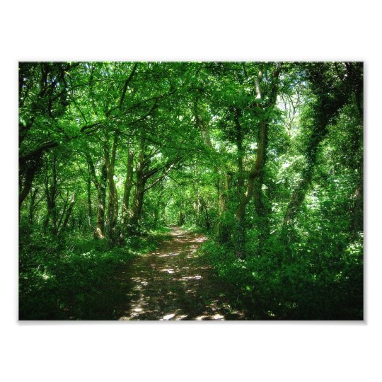 Into the Woods Photo Print