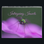 """Intriguing Insects Calendar<br><div class=""""desc"""">Insects are strange and wonderful creatures,  as you can see in this collection of intriguing insects.</div>"""