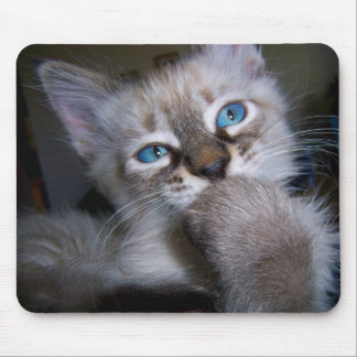 Introspective Thinker Blue-Eyed Kitten Mousepad