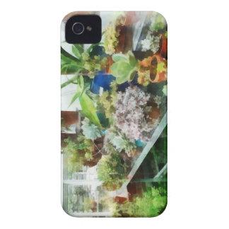 Invernadero con el cactus Case-Mate iPhone 4 coberturas