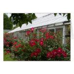 Invernadero de los rosas rojos tarjeta