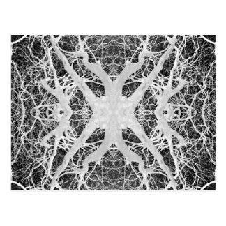 Inverse Treetop Spider's Web Postcard