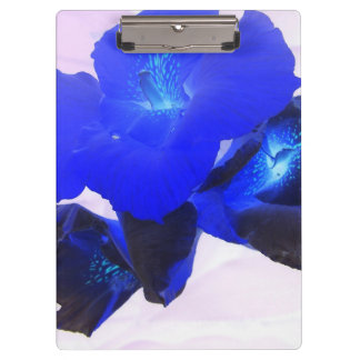 invert blue flowers against pink clipboards