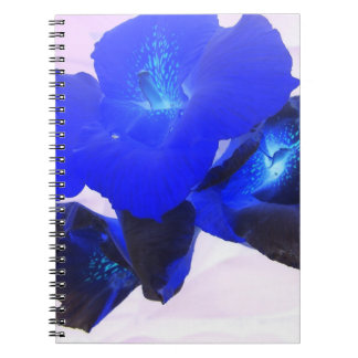 invert blue flowers against pink notebooks