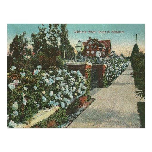 Invierno de California del vintage Tarjetas Postales