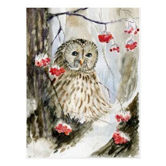 Invierno de la nieve del búho barrado tarjetas postales