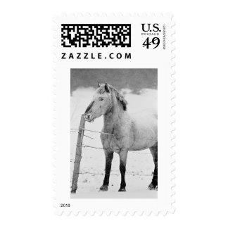 Invierno del caballo blanco franqueo