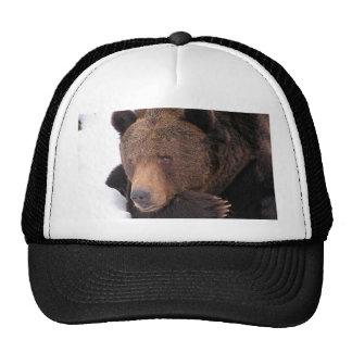 Invierno del oso de Brown Gorra