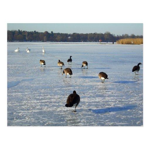 Invierno en el río Havel en Berlín Tarjeta Postal
