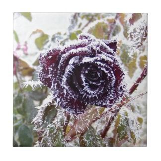 Invierno Rose2 Teja