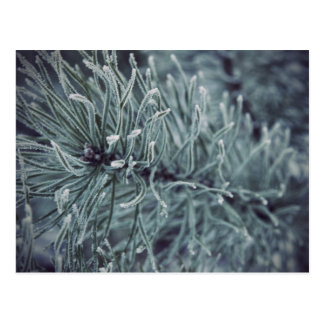 Invierno siberiano 2 tarjetas postales