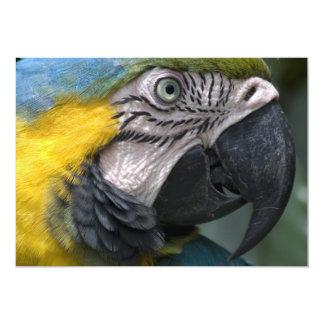 Invitación azul del loro del Macaw Invitación 12,7 X 17,8 Cm